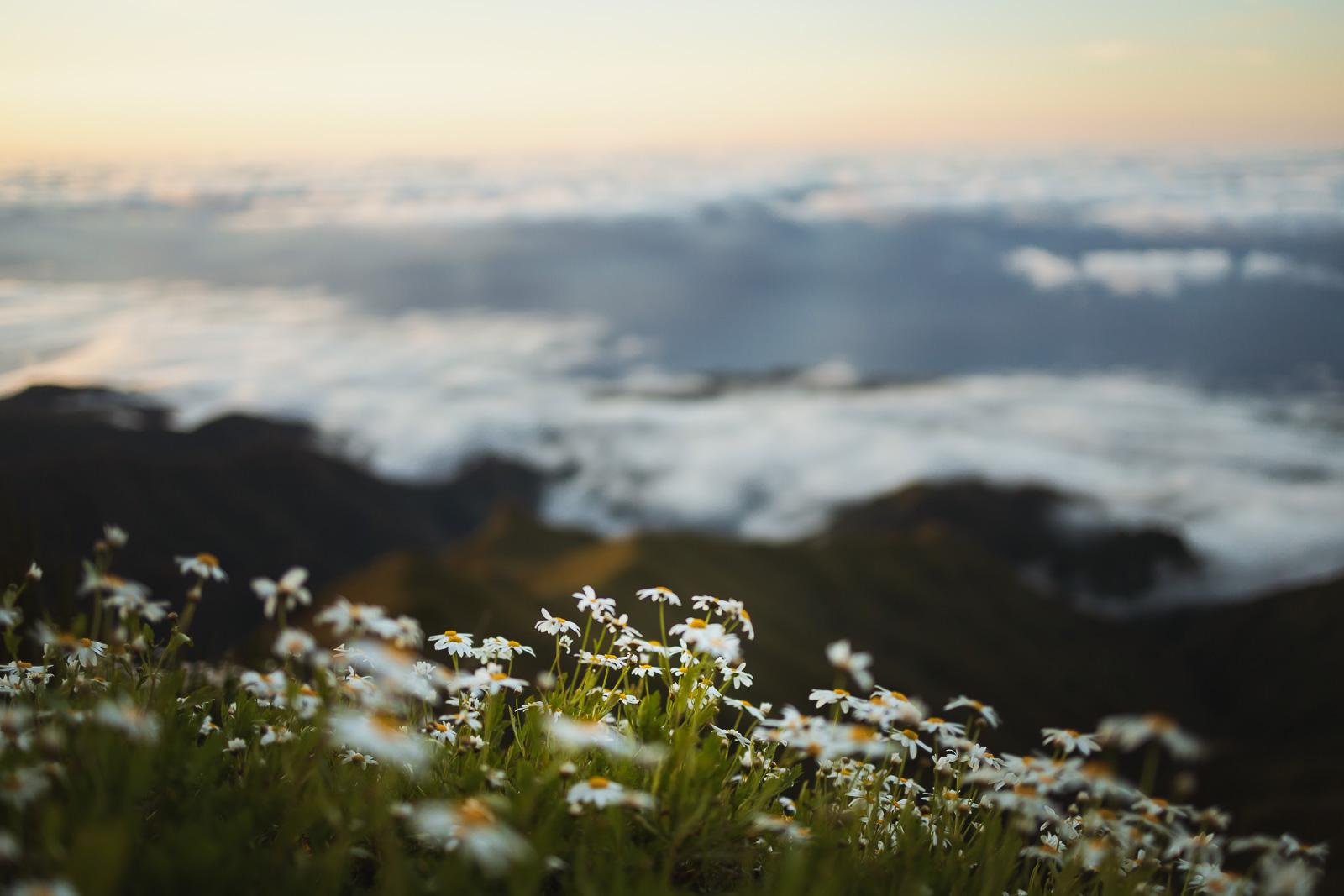 Madeira, a pérola do Atlântico-3